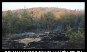 Orman yangını çıkarmak için gelen 2 terörist yakalandı