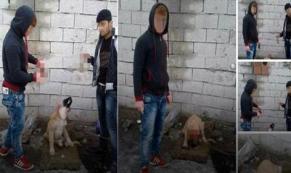 Korkunç olay! Yavru köpeğin kulağını kesip videoya çektiler!