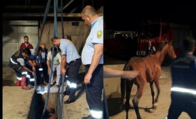Düşen Atı İtfaiye Personelleri Kurtardı