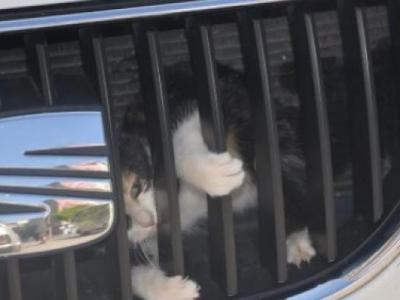 Motor'a Sıkışan Kedi Kurtarıldı