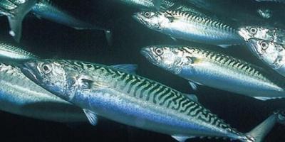 Balık Tutmadan Önce Takım Bilgisini Gözden Geçirin