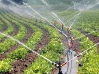 Güncel Tarım Haberleri ve Zirai Piyasalar