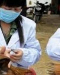 Çin'in 16 Eyaletinde Kuş Gribi Vakası