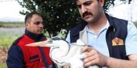 Yaralı Balıkçıl Kuş Tedavi Altına Alındı