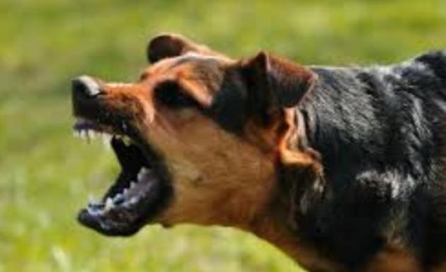 Tarlasını Süren Çiftçiye Köpekle Saldırdılar