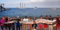 Sahile Vuran Kürek Balığı