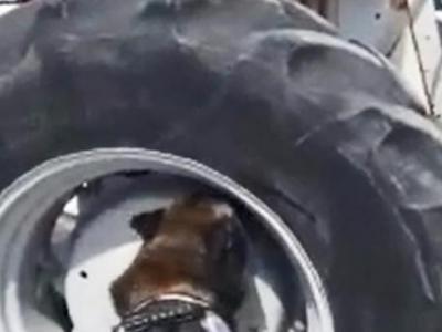 Traktör Lastiğinde 90 Kilo 300 Gram Uyuşturucu Madde Bulundu