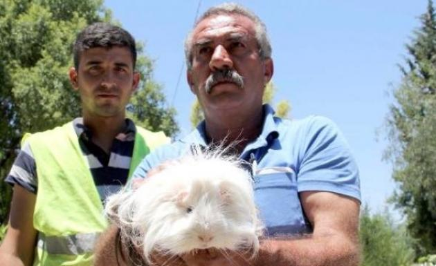 Mezarlık Temizliğinde Evcil Kemirici Hayvan Bulundu