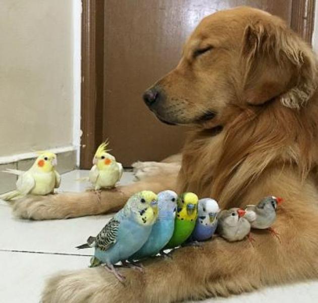 Evcil Hayvanlara Dair Her Şey…