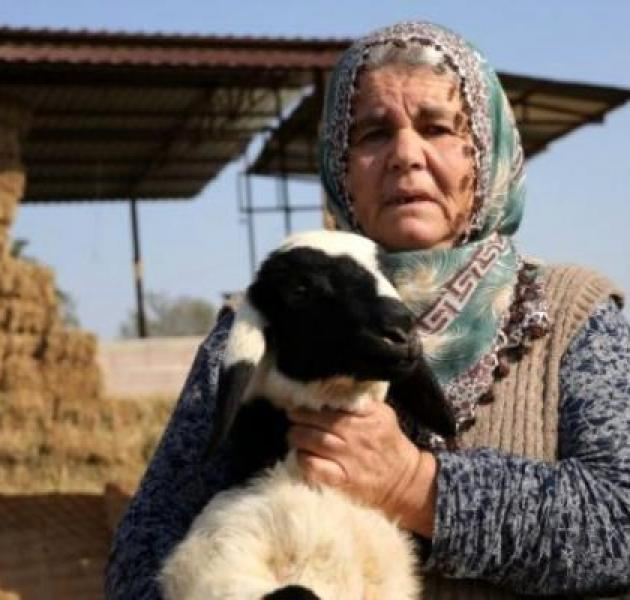 Koyunları çalınınca dünyası başına yıkıldı! Hırsızlara yalvardı
