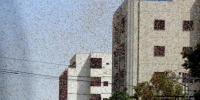 Pakistan'da çekirge istilası sebebiyle OHAL ilan edildi