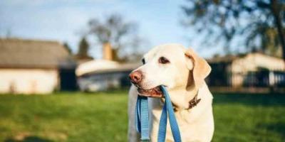 Antalya'da En İyi Köpek Eğitimi Çiftliği